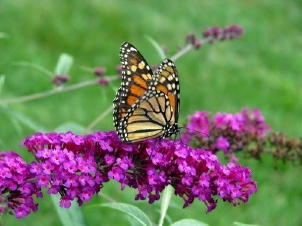 10 colorful and rich nectar flowers that attract ...